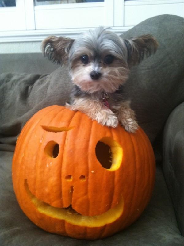 Tendrement Mardi #10 Spécial Halloween