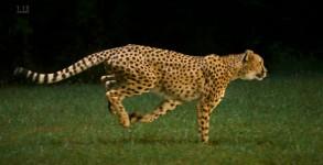 guepard-1200fps